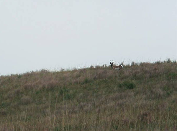 2016 Archery Antelope Hunt at The Rackett